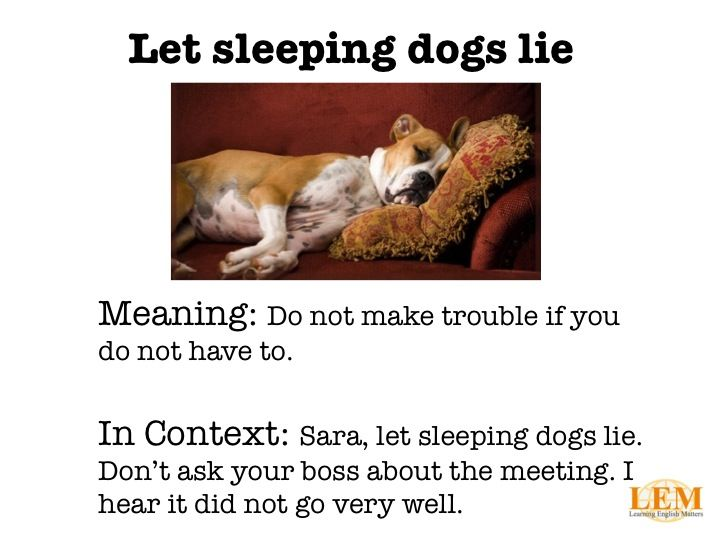 Let Sleeping Dogs Lie Google Search Sleeping Dogs