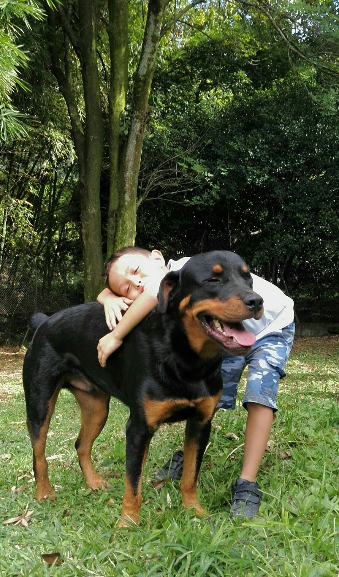 rottweiler hulk hundebilder pinterest. Black Bedroom Furniture Sets. Home Design Ideas