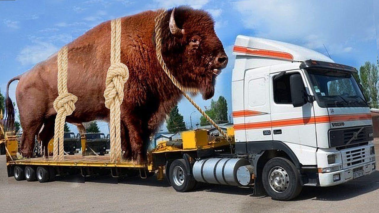 Картинки по запросу los 7 animales gigantes capturados por el hombre