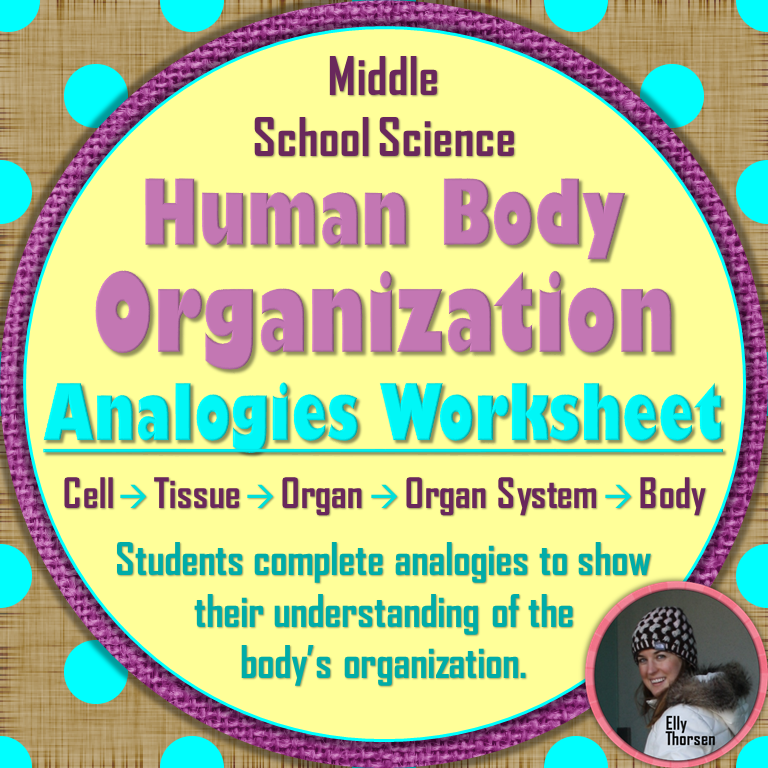 human body organization analogies worksheet human body worksheets and students. Black Bedroom Furniture Sets. Home Design Ideas