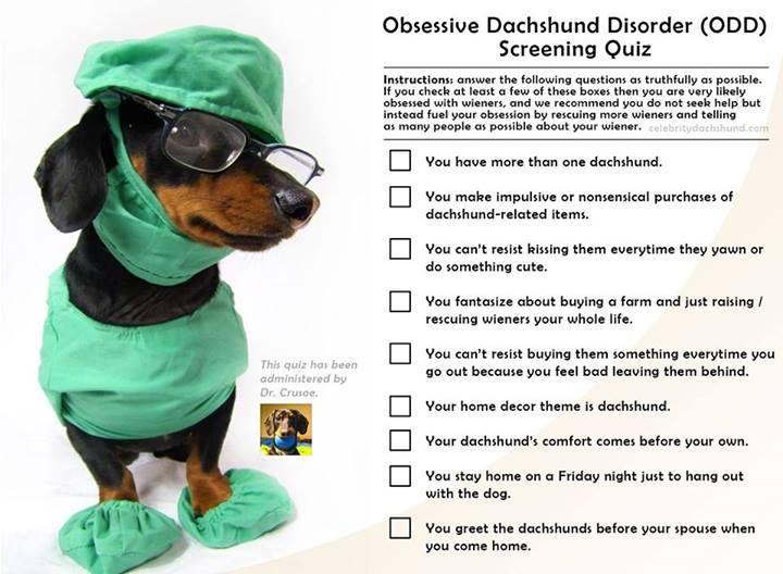 Obsessive Dachshund Disorder Crusoe The Celebrity Dachshund