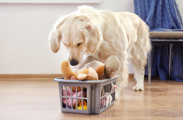 How To Clean Dog Toys In 2020 Dog Toys Dogs Pet Safe