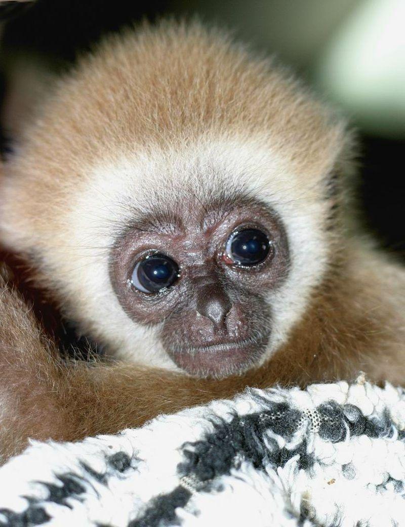 Affen Als Haustier Affe Als Haustier Affenbilder Tiere
