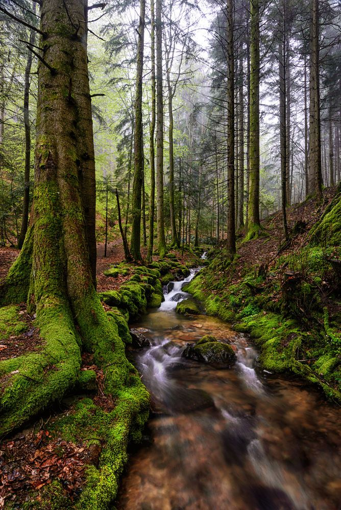 Black Forest Course Of A River Black Forest Germany Black Forest Mystical Forest