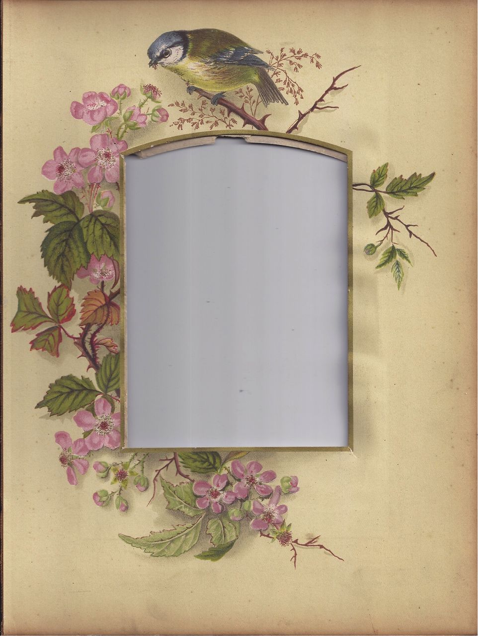 Photograph Mat from Victorian Photo Album, Bird, Pink Wild Roses ...