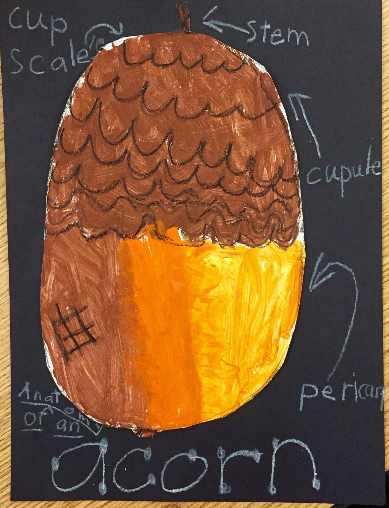 Anatomy of an Acorn