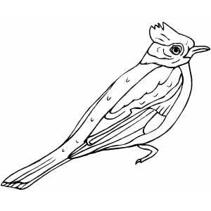 FreeThe Bird Coloring Book Contains Line Drawings Of Many Common Feeder Birds