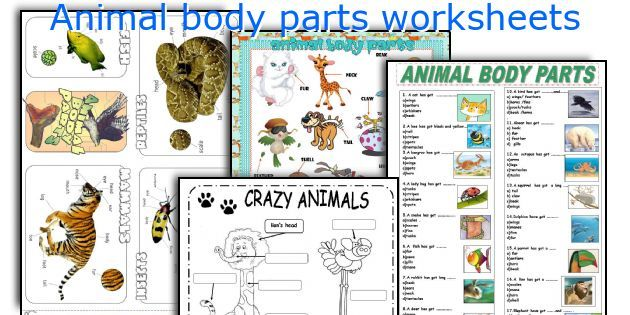 animal body parts worksheets quizes pinterest animal body parts worksheets and vocabulary. Black Bedroom Furniture Sets. Home Design Ideas