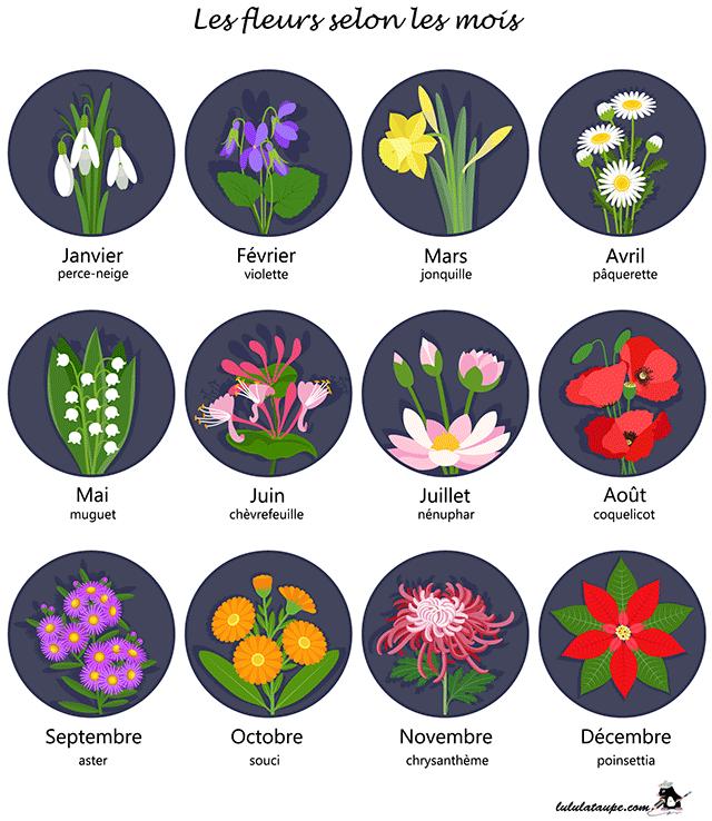Les Fleurs Selon Les Mois Fleurs Mois Fleurs Lecon De Choses