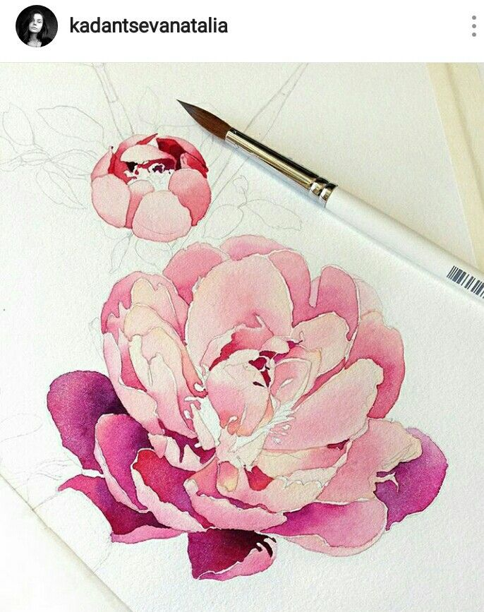 Watercolor Peony Watercolor Peonies Flower Painting Flower Drawing