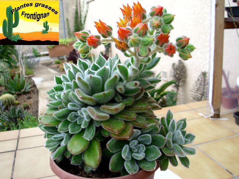 plante grasse d'ombre
