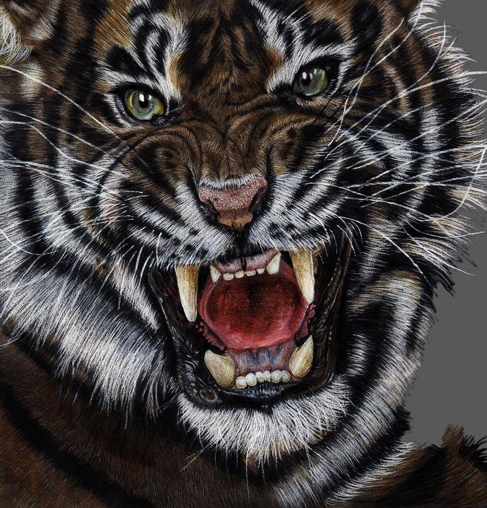 Tiger Faber Castell Polychromos