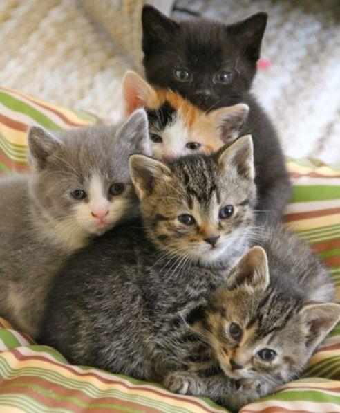 Epingle Par Marisa Ruffolo Sur I Love Little Cats 4 Chats Et Chatons Animaux Adorables Chat Mignon
