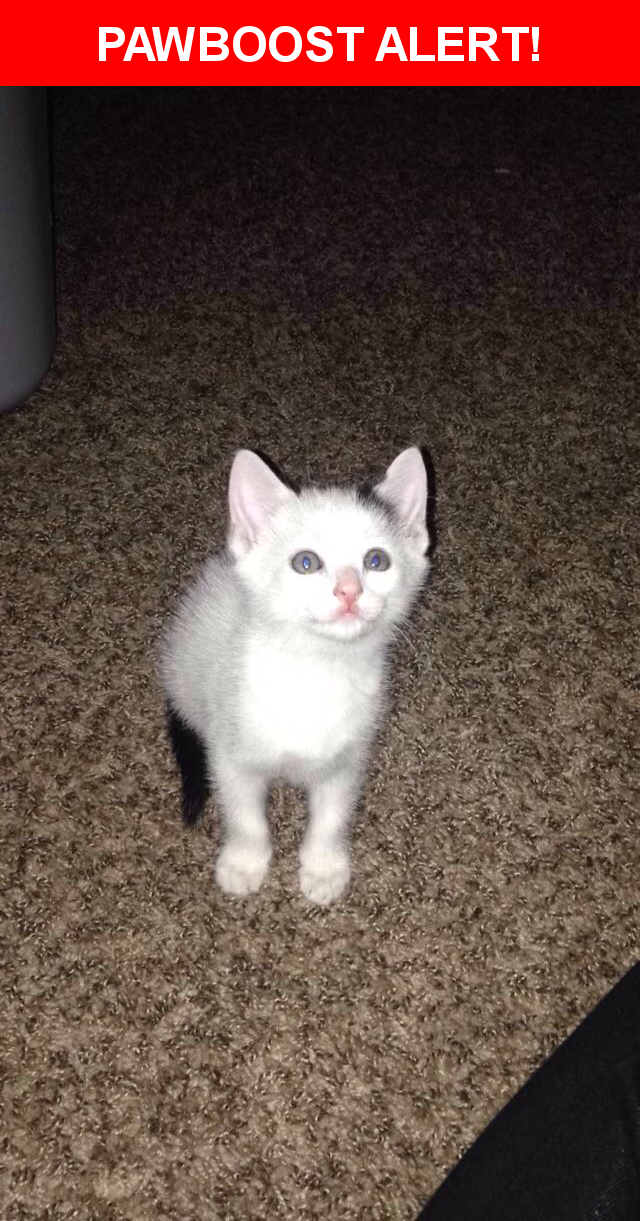 Please spread the word! Wally was last seen in Louisville, KY 40208.  Description: He is not neutered. He is white with some black spots. Blue/Green eyes. He is a new kitten so has no collar.   Nearest Address: 1475 South 3rd Street, Louisville, KY, United States