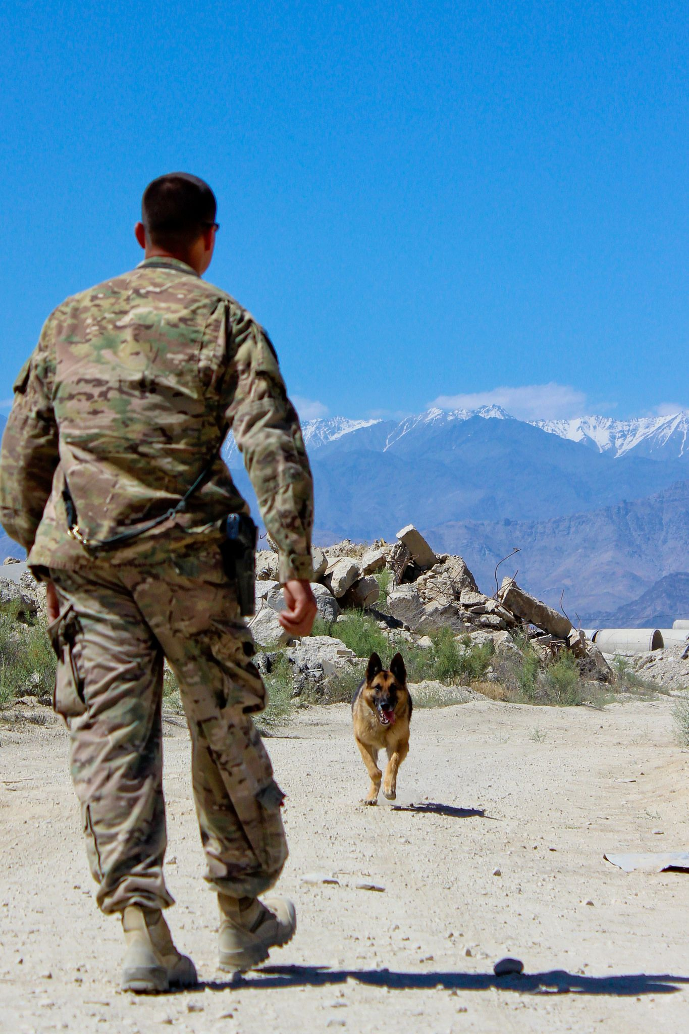 military working dog handlers its the best job ever - Jobs With Animals Best Jobs Working With Animals