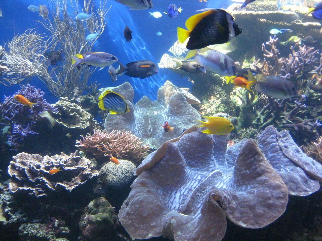 Pin by elizabeth hudson on fishaquariumwater related pinterest