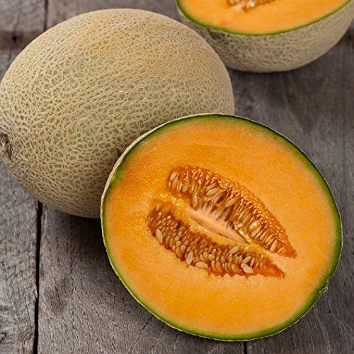 David S Garden Seeds Fruit Cantaloupe Hales Best Eb113Io 400 x 300