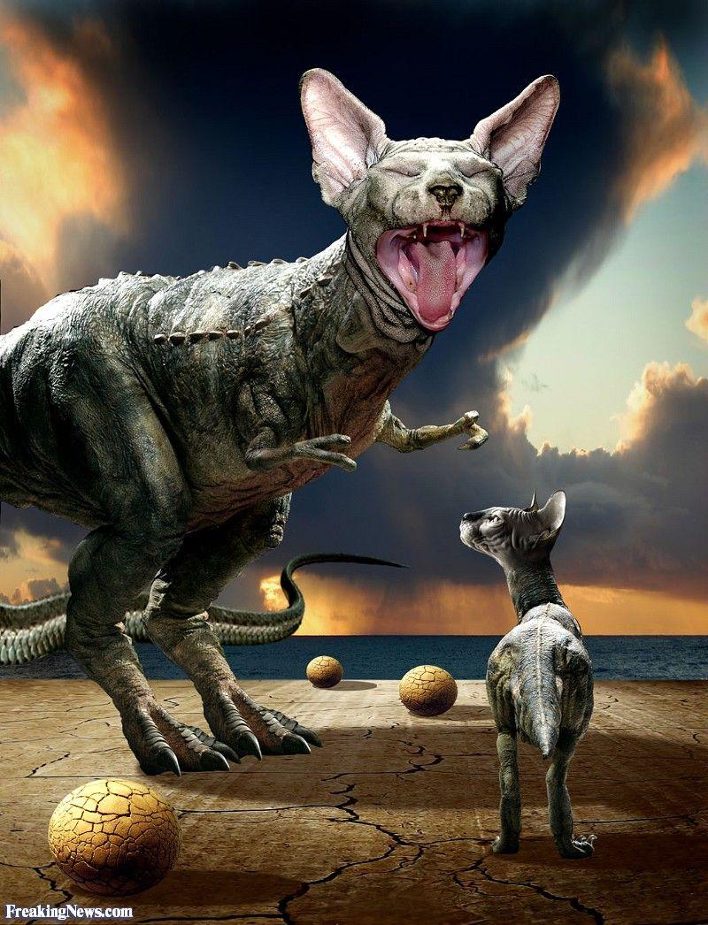 Dinosaur Cats T Rex Sphynx Cat Pics I Love Cats Cat Lovers