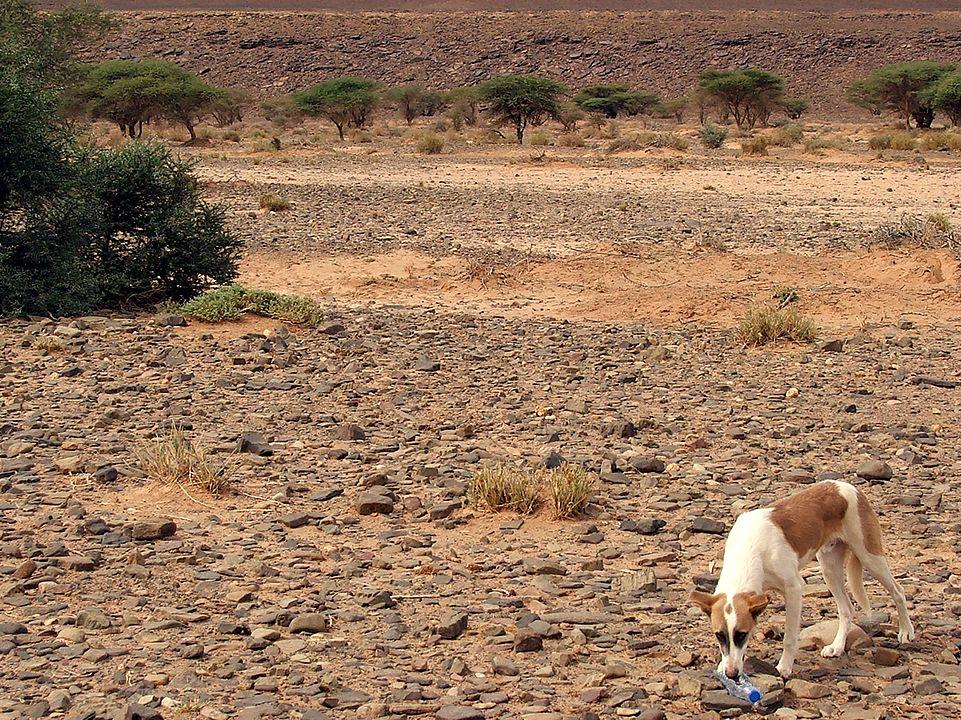 Reconhecimento / Recognition SDC 2014: Cão no deserto de Marrocos / Dog in the desert of Morocco #saharadesertchallenge #mundodeaventuras
