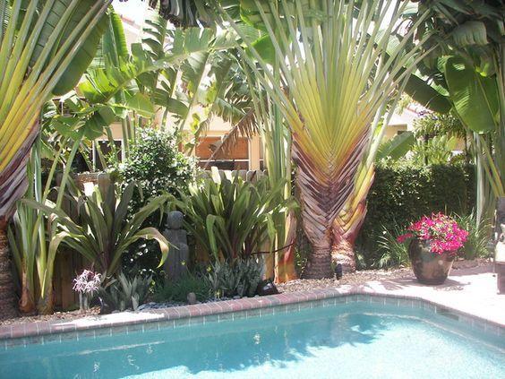 Tropical Palms Around Pool Nice Shade Bougainvillea