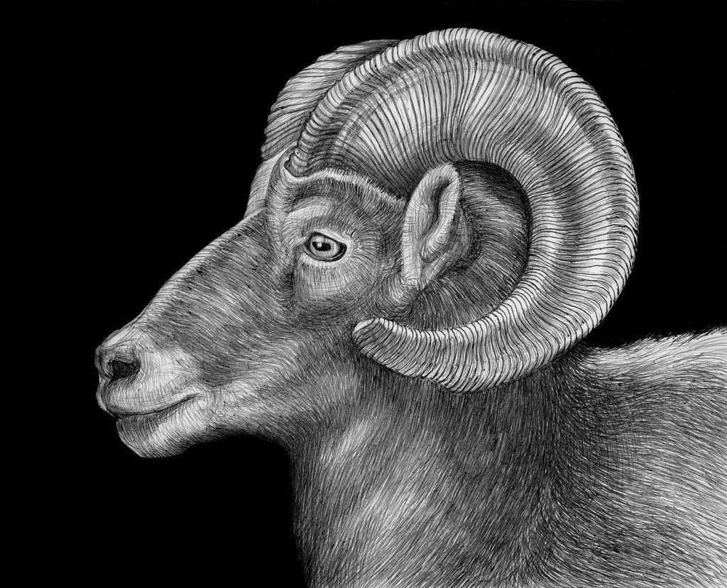 Awesome Pen And Ink Drawings Of Animals