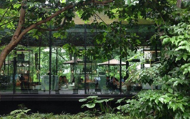 都心の森の中に ラグジュアリー空間 高級リゾート アマン のカフェが素敵 Grape 家 外観 モダン モダンハウスの外観 ガーデン デザイン