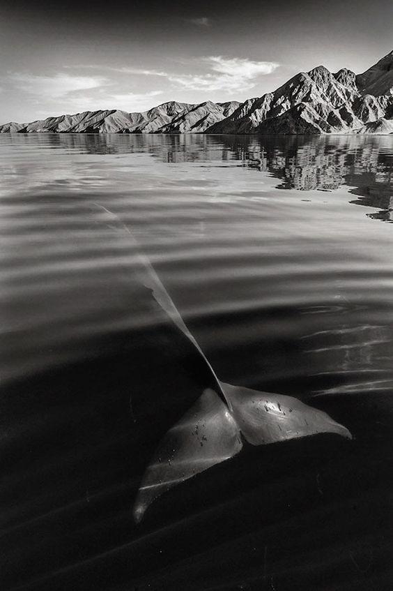Fotógrafo Passa 25 Anos Documentando A Beleza Majestosa De Baleias E Golfinhos: