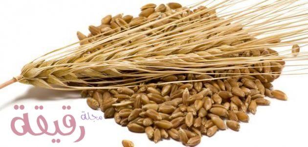 فوائد الشعير الصحية والجمالية وطريقة تحضير وصفات الشعير الفعالة Barley Health Benefits Grain Foods Barley