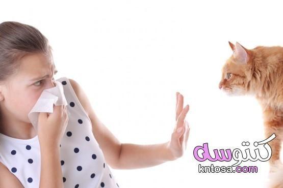 علامات تؤكد حساسية القطط In 2021 Thumbs Up