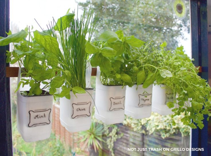 Hanging Kitchen Herb Garden Part - 41: Indoor Bottle Herb Garden - From Recycled Milk Bottles