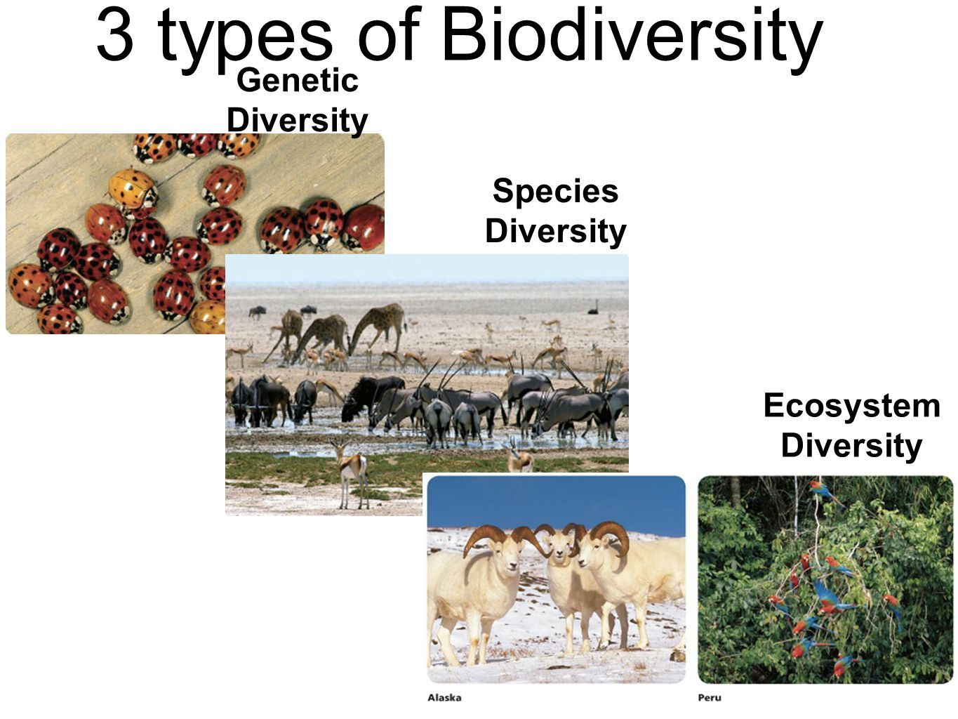 There Are Three Types Of Biodiversity They Are As Follows