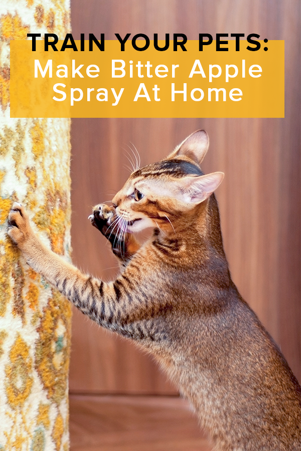 Homemade Bitter Apple Spray Pets Animals Pets Pet Treats