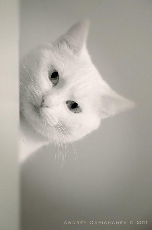 Pin By Jennifer Farley Savory Simpl On Cute Animals Pretty Cats Cats Cute Cats