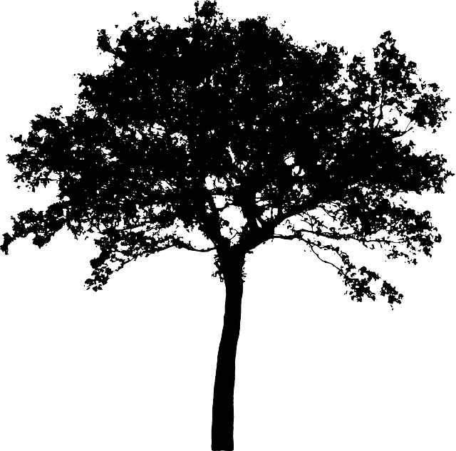 Free Image On Pixabay Tree Bush Nature Leaves Trunk Tree Silhouette Silhouette Vector Artificial Trees Diy