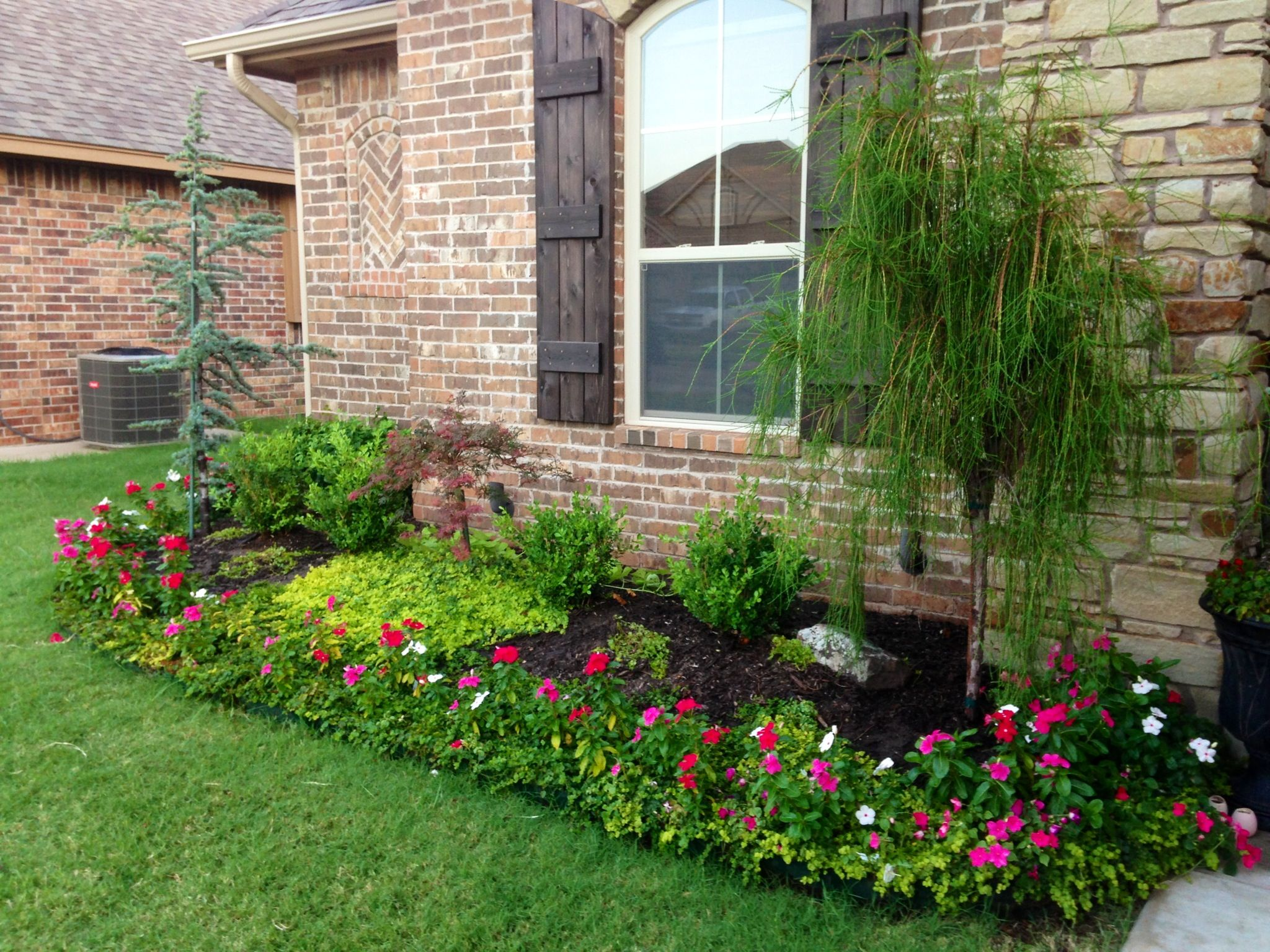 Flower bed with creeping Jenny ground cover. it is a