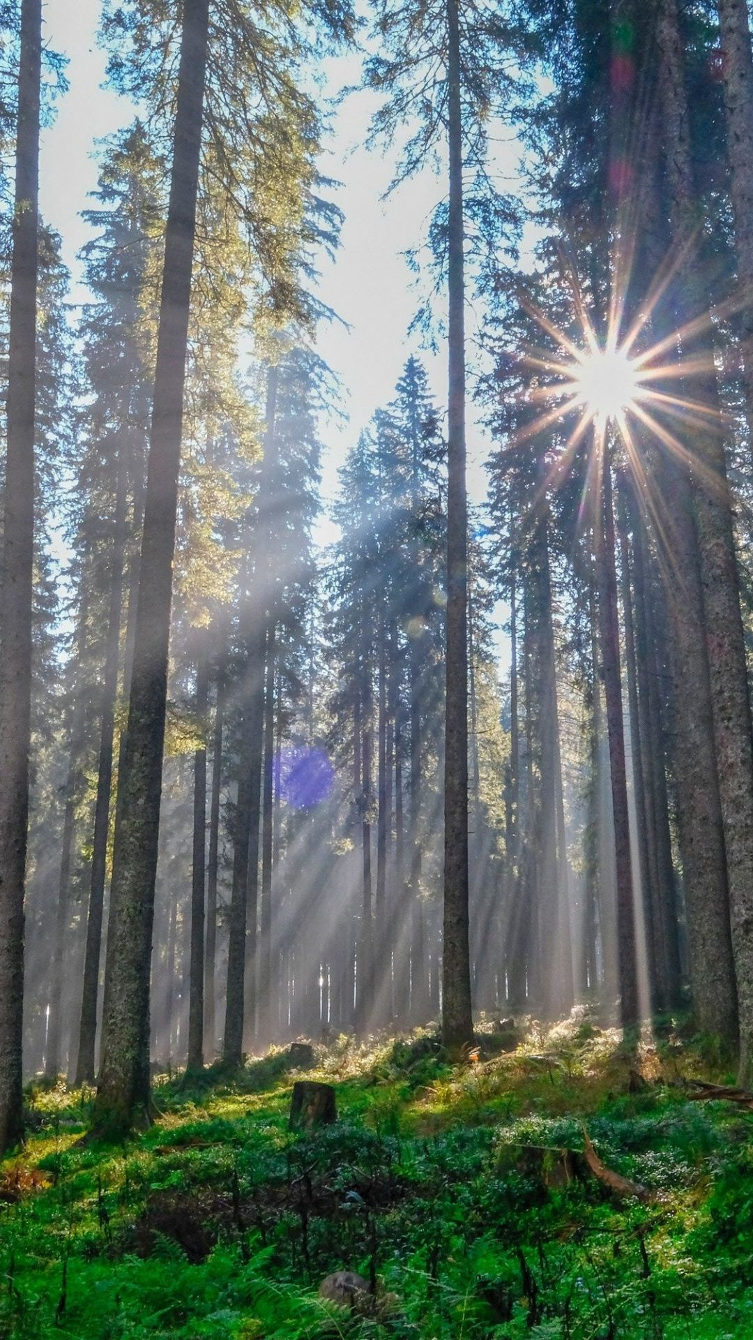 Sunbeams Though Trees Nature Morning 1080x1920 Wallpaper Beautiful Nature Landscape Pictures Nature