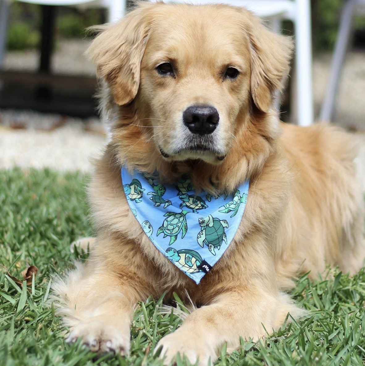 Buddybands Cute Animals Pets Pup