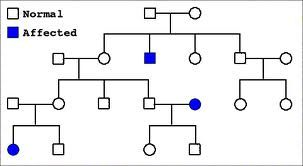 PDF with a great explanation of pedigree's with activities