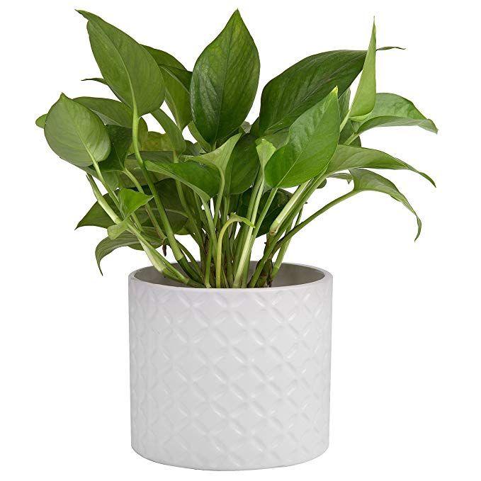 Amazon Com 5 Inch White Ceramic Round Succulent Plant P*T 640 x 480