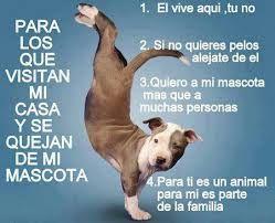 Resultado De Imagen Para Si Mi Perro Te Molesta Recuerda El Vive Aqui Tu No Perros Frases Perros Mascotas Perros