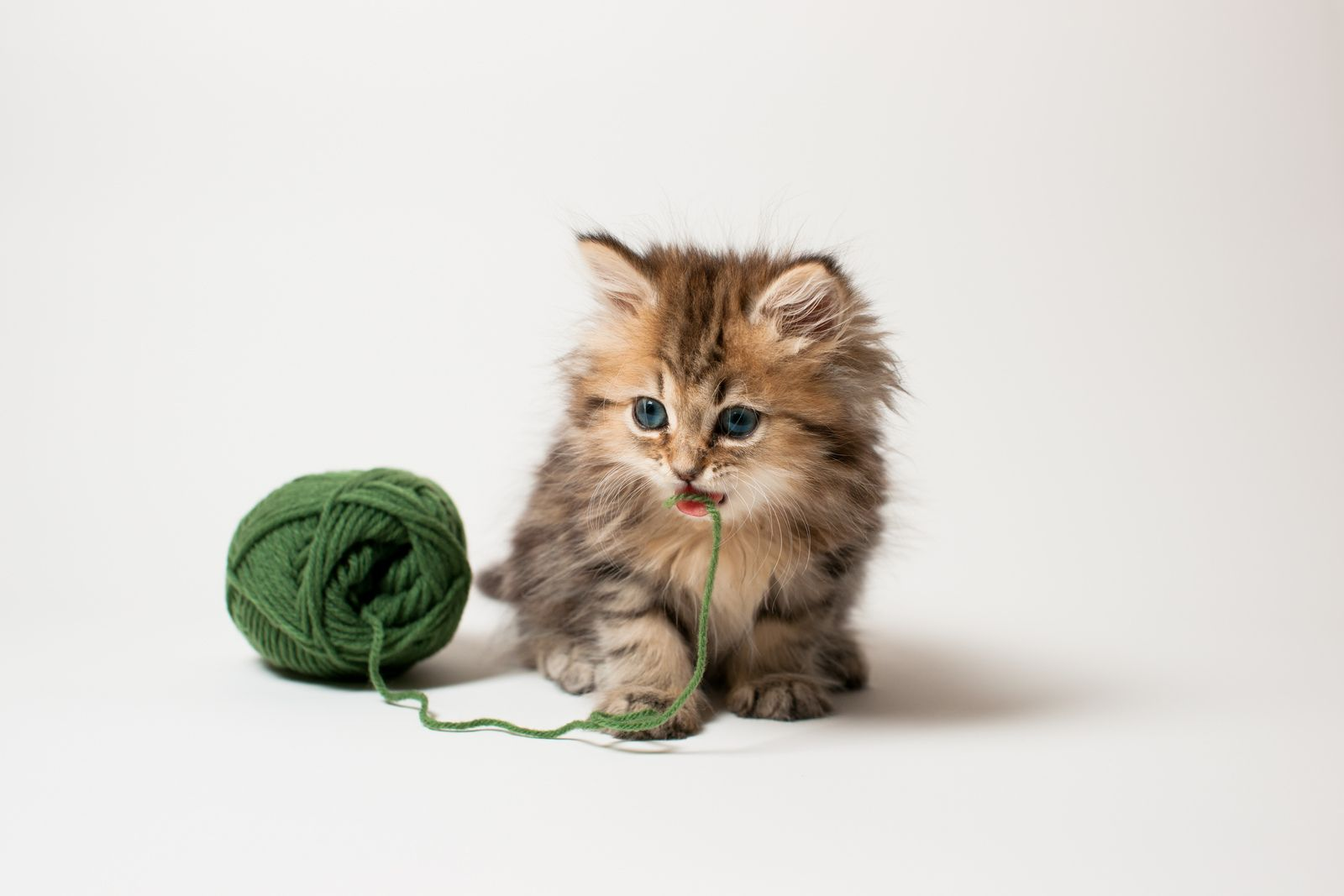 Untitled Kittens Cutest Cat Photography Big Cats Photography