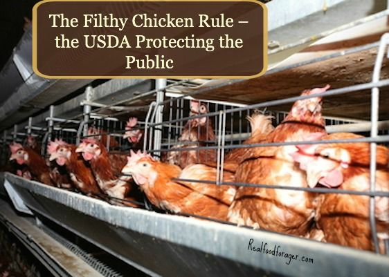 The Filthy Chicken Rule What It Means To Our Food And How To
