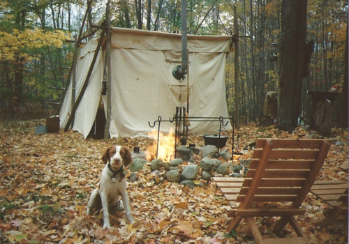 [leaves + camping + puppy + campfire + backdrop. ok.]