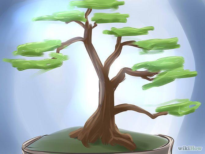 Cr er un bonsa bonsa bonza et coins - Comment faire un bonsai ...