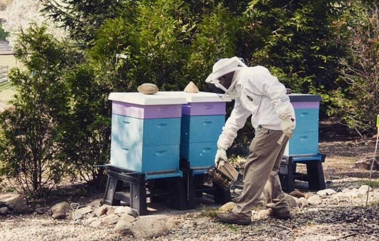 Head to BeeSmartDesigns.com to check out all of our product details and a list of all our retailers! Check it out today 🐝  • • • • #beesmart #bees #bee #beekeeper #beekeeping #honeybee #honeybees #beekeepers #hive #hives #beehive #beehives #apiary #apiaries #apiarist