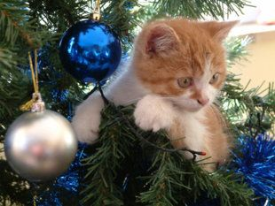 ways to keep your cat away from your tree choosetobemorefestive tory turnley lemoine - How To Keep Cat Away From Christmas Tree