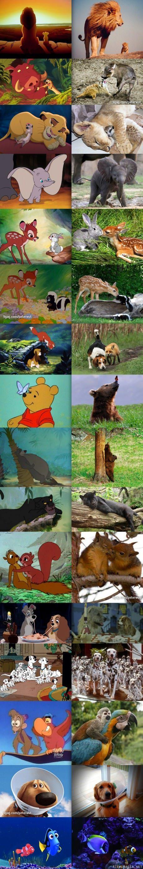 Disneyn eläimet irl