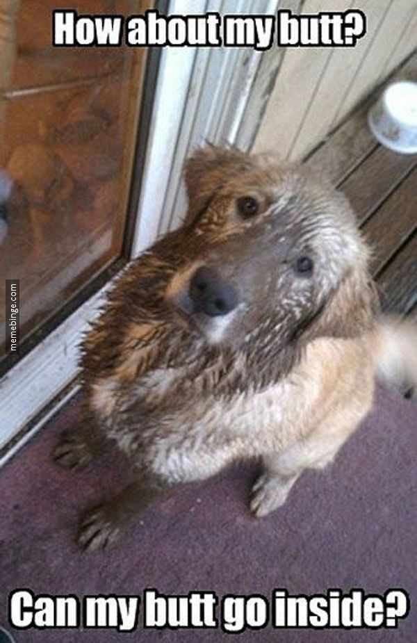 Poor Puppy Needs A Bath Funny Dog Pictures Funny Animal