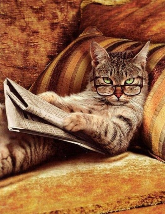 This is exactly how my cat looks at me ... sans the glasses and paper :)
