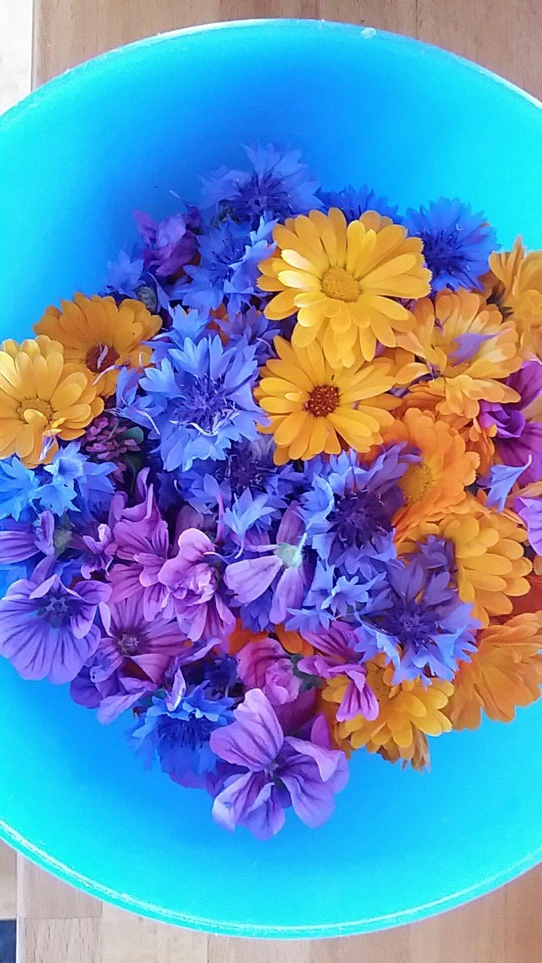 Blomster til teblandinger